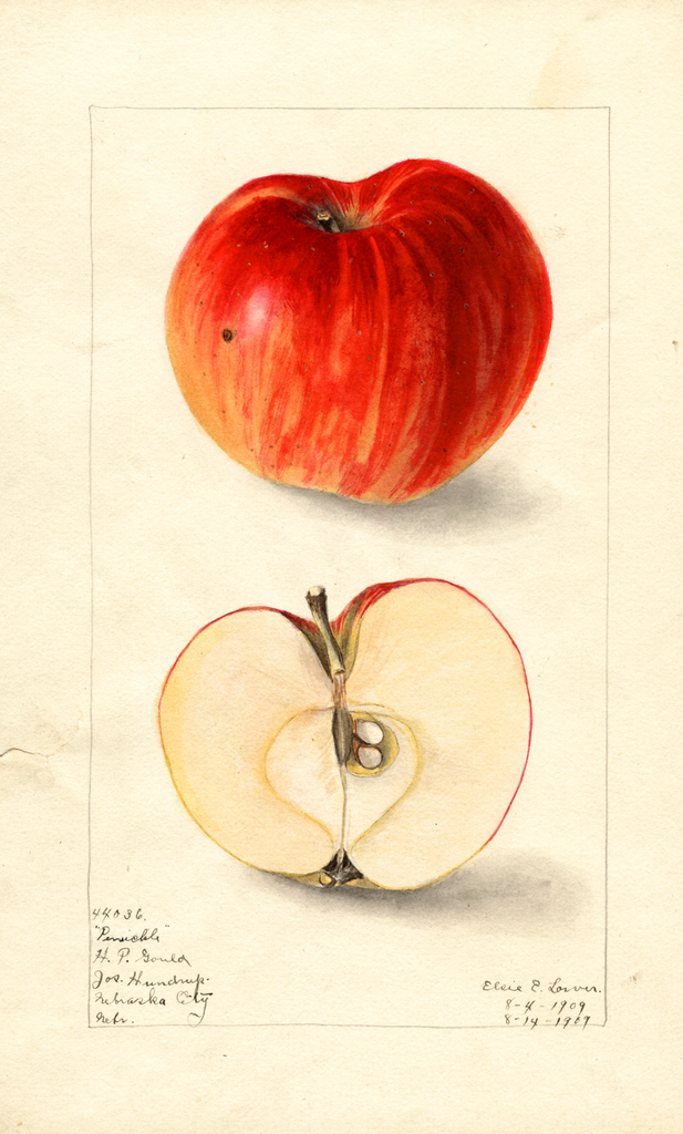 Apples, Penuckle (1909)