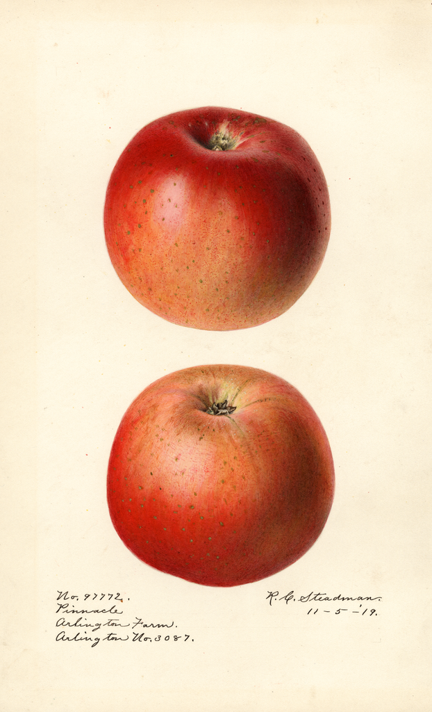 Apples, Pinnacle (1919)