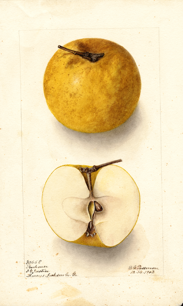 Apples, Poorhouse (1903)