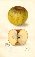 Apples, Poorhouse (1908)