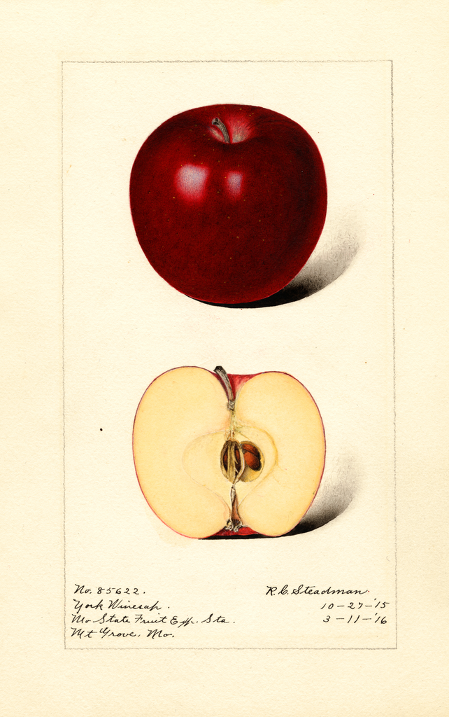 Apples, York Winesap (1916)