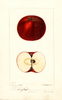 Apples, Pokeberry Red (1896)