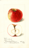 Apples, Pocono (1899)