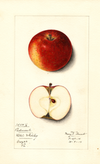 Apples, Piedmont (1914)