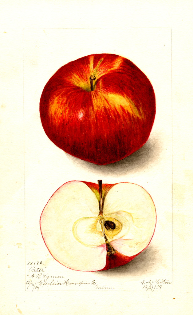Apples, Peter (1904)