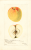 Apples, Cochran (1901)