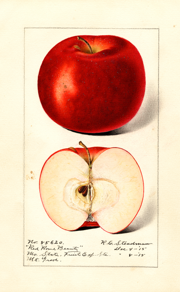 Apples, Red Rome Beauty (1915)