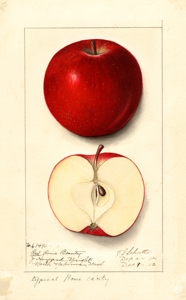 Apples, Red Rome Beauty (1912)