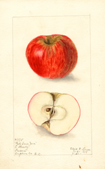 Apples, Red Sour June (1908)