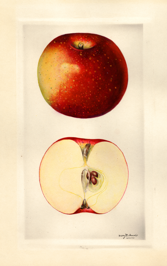 Apples, Red Sauce (1930)