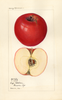 Apples, Red Spy (1923)