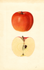 Apples, Red Spy (1936)