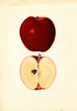 Apples, Southern Oregon Red Spitz (1936)