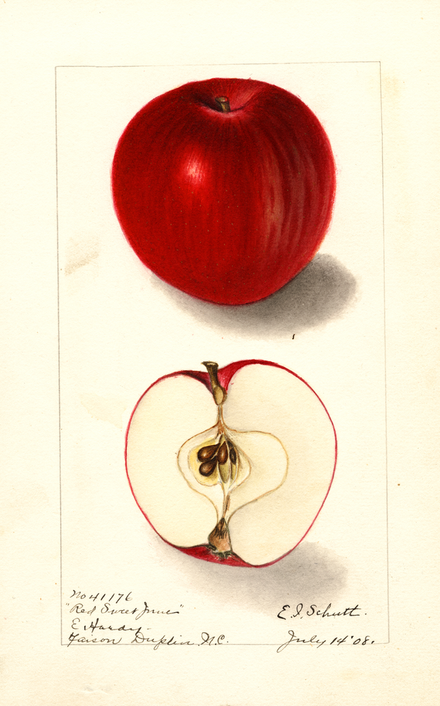 Apples, Red Sweet June (1908)