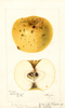Apples, Reinette Pippin Of Downing (1895)
