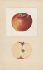 Apples, Arkansas (1934)