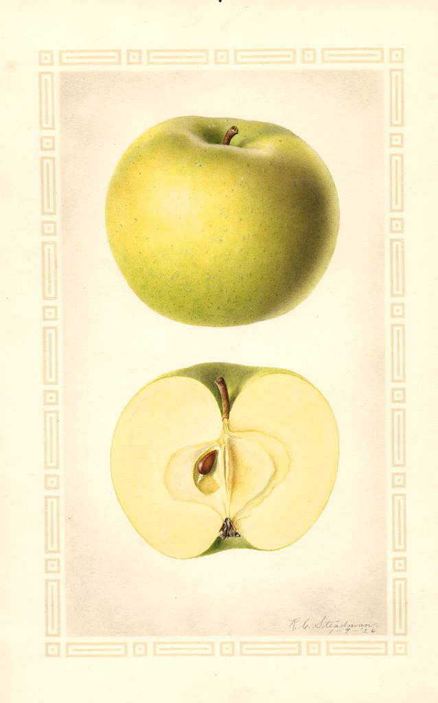 Apples, Rhode Island Greening (1926)