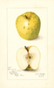 Apples, Rhode Island Greening (1907)