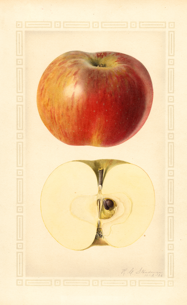 Apples, Wolf River (1926)