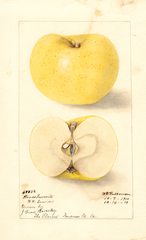 Apples, Woods Favorite (1910)