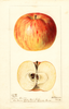 Apples, Wythe (1896)