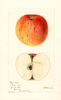 Apples, Royal Sweet (1894)