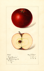 Apples, Ruby Pearmain (1916)