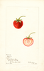 Strawberries, Giant (1900)