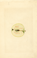 Apples, Mcintosh (1933)