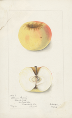 Apples, Athens Beauty (1902)