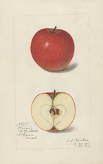 Apples, Atsion (1915)