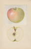 Apples, August Sweet (1937)