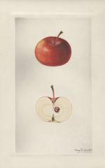 Apples, Augustine Winter (1929)