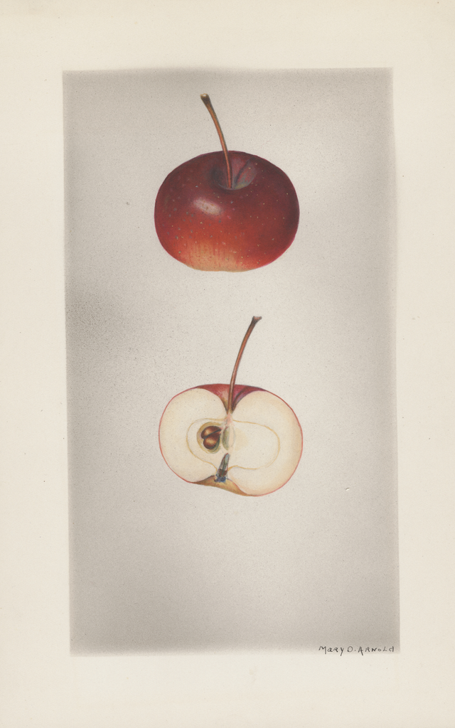 Apples, Augustine Winter (1928)