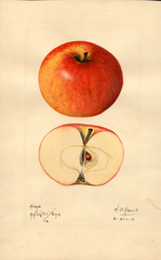 Apples, Avera (1921)