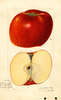 Apples, York Imperial (1916)