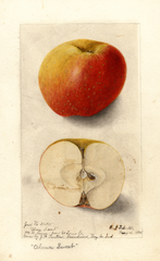 Apples, Alma Sweet (1904)