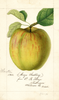 Apples, Maye (1894)
