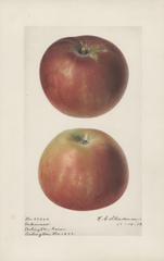 Apples, Arkansas (1919)