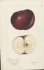 Apples, Arkansas Black (1895)