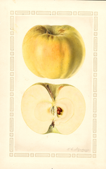 Apples, Arnold (1927)