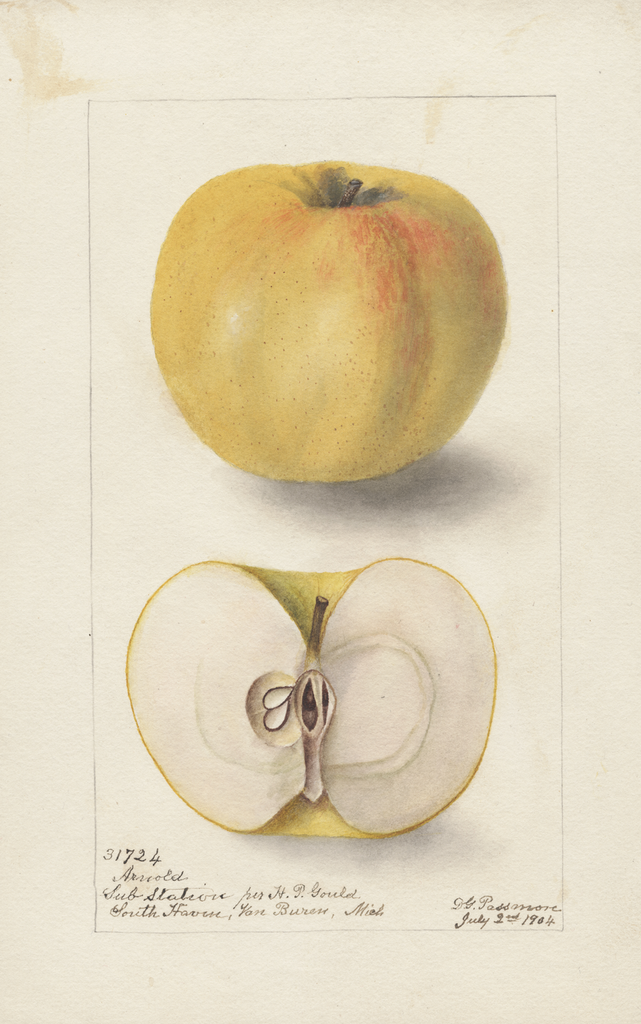 Apples, Arnold (1904)