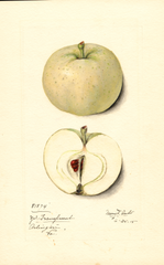 Apples, Yellow Transparent (1915)