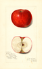 Apples, Williams (1915)