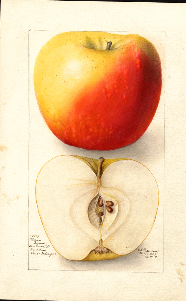 Apples, Banana (1908)