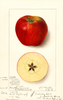 Apples, Winesap (1912)