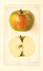 Apples, Adams (1927)