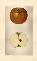Apples, Annette (1928)