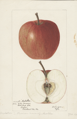 Apples, Arabskoe (1896)