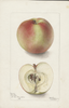 Apples, Arabka (1901)